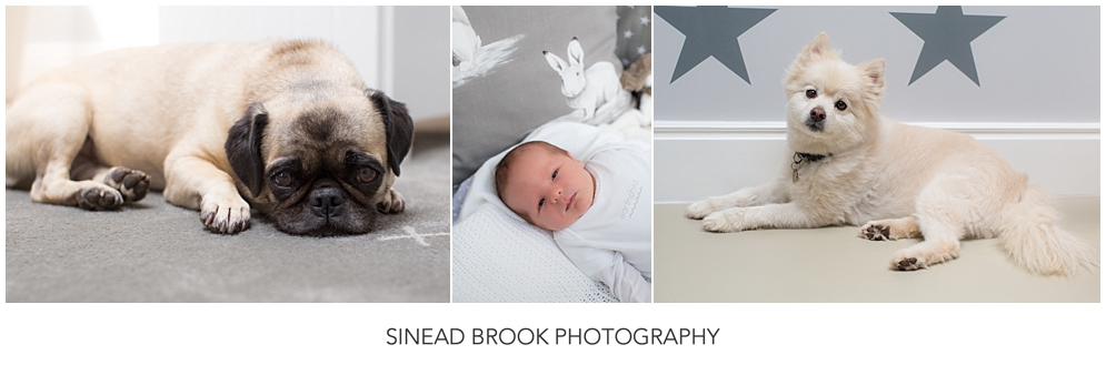 Newborn Photography joburg12